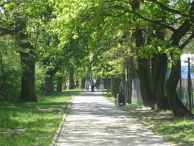 6 lat, 150 tysięcy drzew mniej!