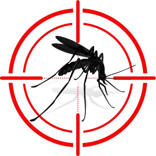 Komar tocwana bestyjka…