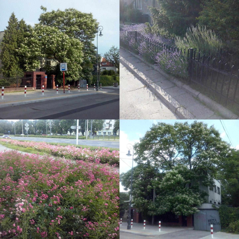 Dobre drzewa ikrzewy dosadzenia wmiastach