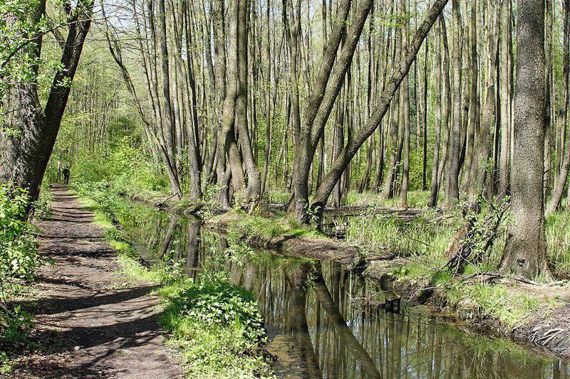 Dlaczego nieuratują nas lasy?